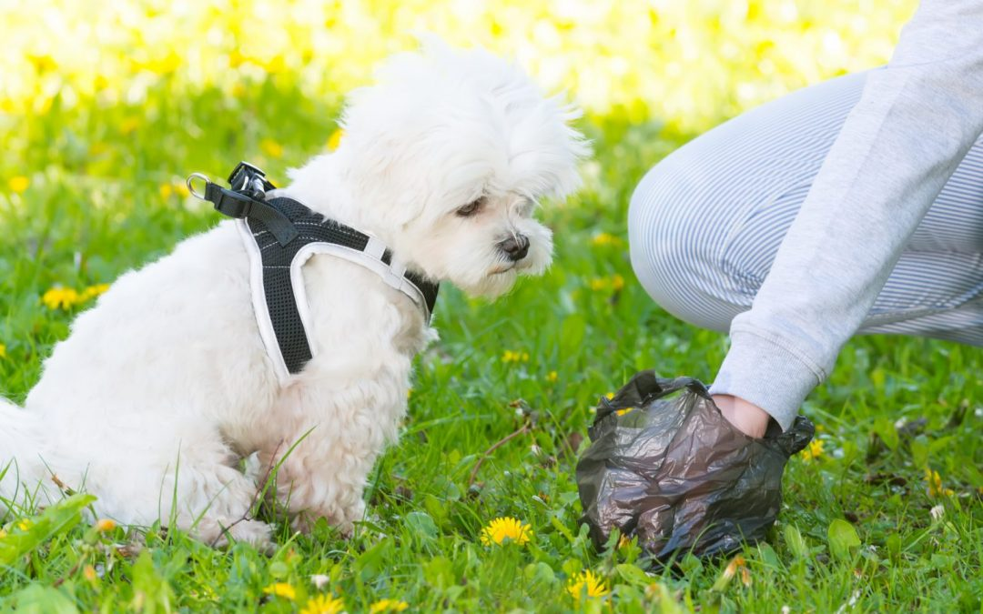 Reports of dog fouling across the area falls by 45 per cent