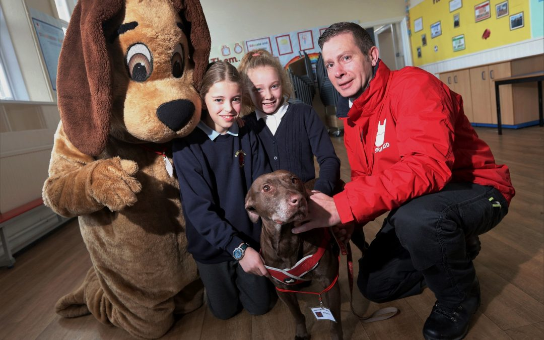 Keeping man's best friend off the streets as partnership reduces number of stray dogs