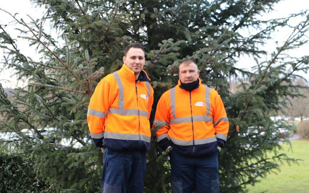 Council offering residents a free collection service for their real Christmas trees