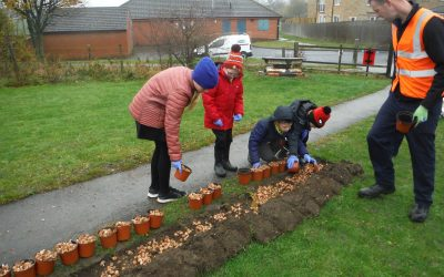 Community groups encouraged to apply for bulbs to brighten up their area