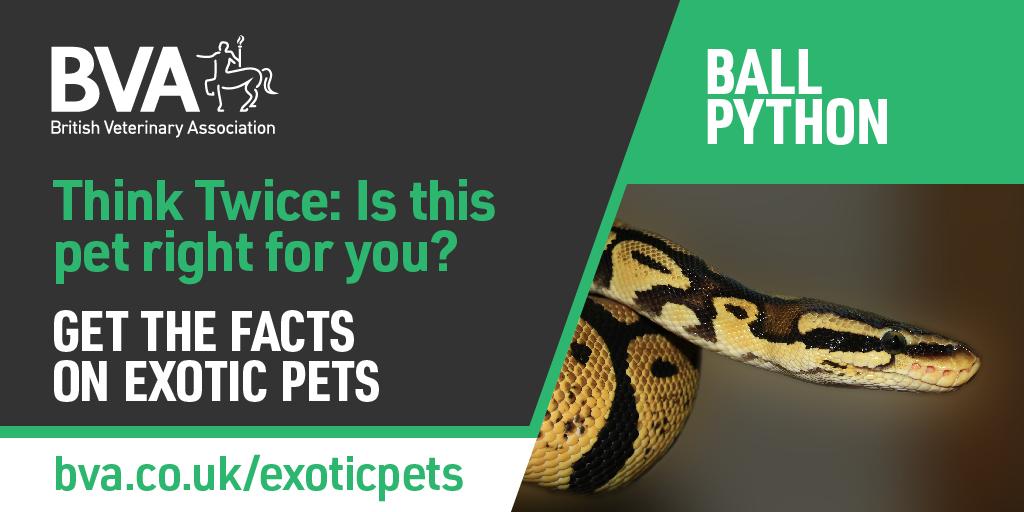 BVA puts the welfare needs of reptiles in the spotlight